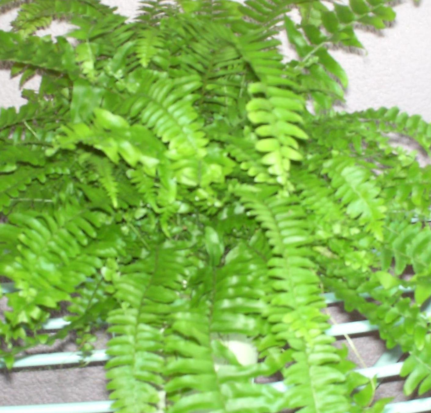 Plantas y sus nombres pictures to pin on pinterest pinsdaddy for Infos jardin