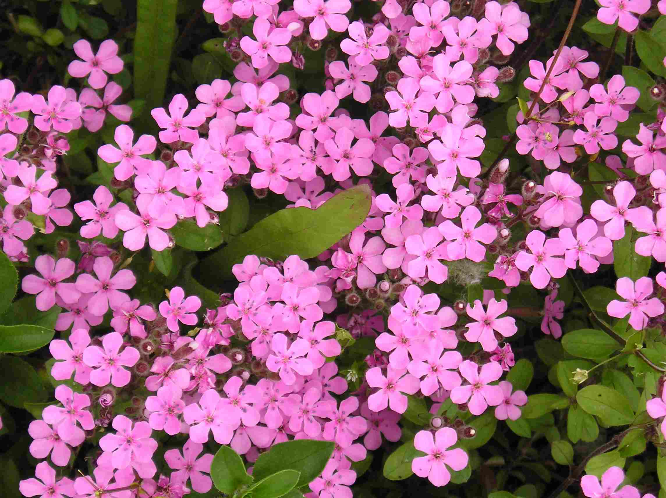 Fotos De Flores: Pequeñas Bellezas