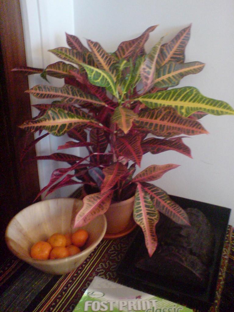 Como cuidar las plantas de interior - Como cuidar las plantas de exterior ...