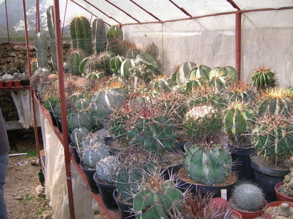Visita al vivero en la habana for Donde venden cactus