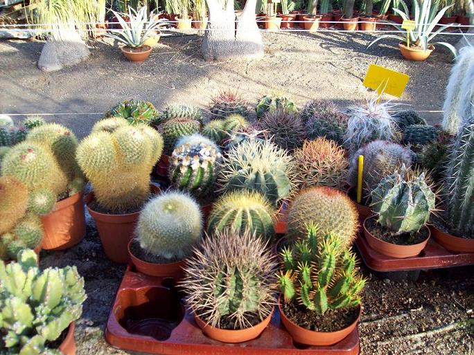 Foto de vivero donde compro cactus for Donde venden cactus