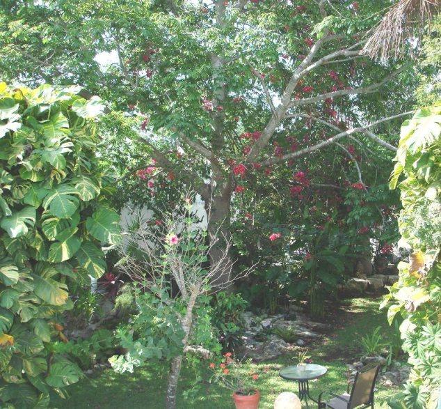 Rbol para sombra for Arboles sombra jardin