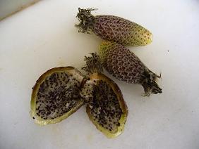 Limpiar fruto de ferocactus for Feroxcactus chile