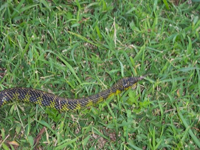 Serpiente para identificar estaba en el estanque for Casa jardin culebra