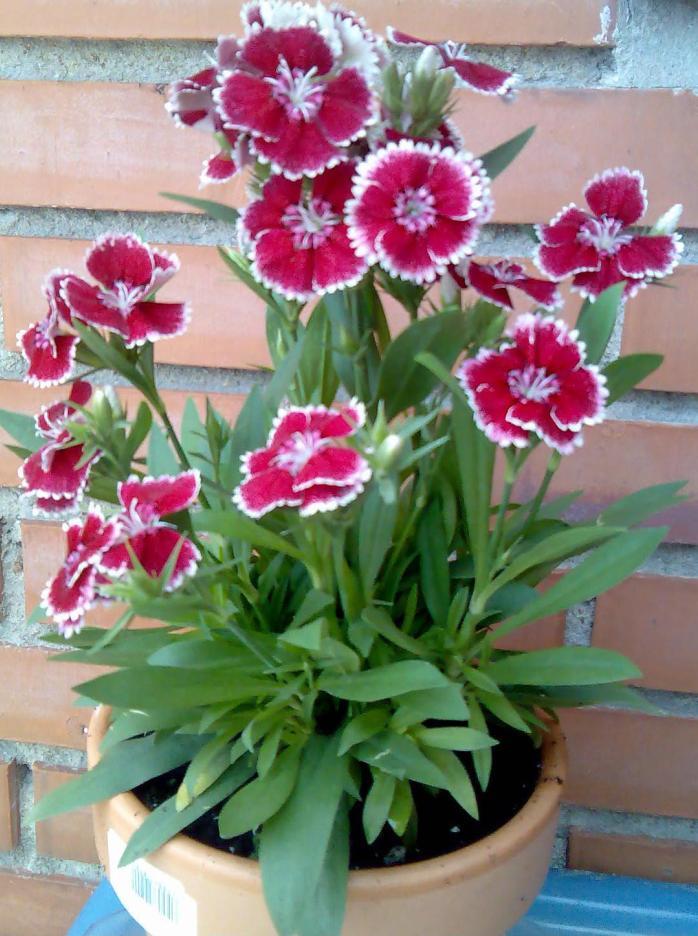 Plantas de exterior para una terraza en oviedo for Plantas de exterior nombres