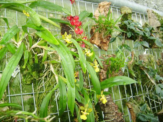 Compra en la hacienda agricola for Infos jardin