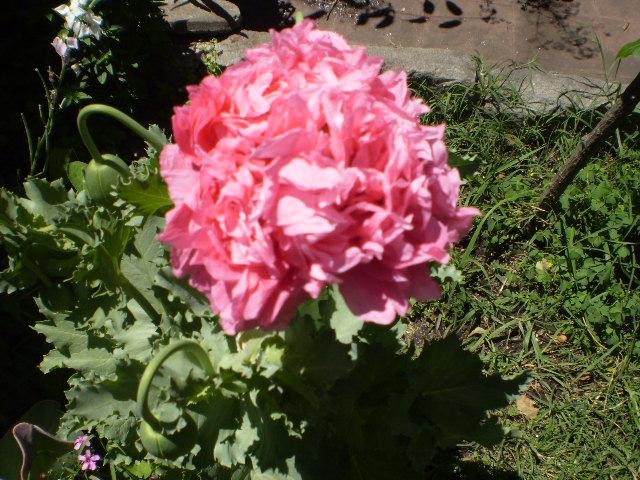 Fotos del jardin de amapola for Amapola jardin de infantes palermo