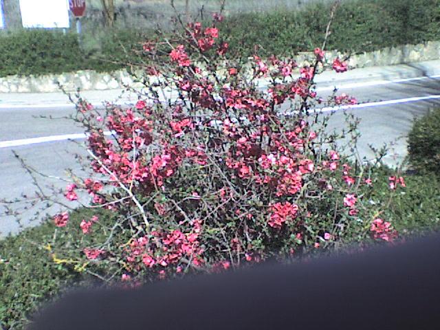 Arbustos en jardin p blico - Arbustos jardin ...