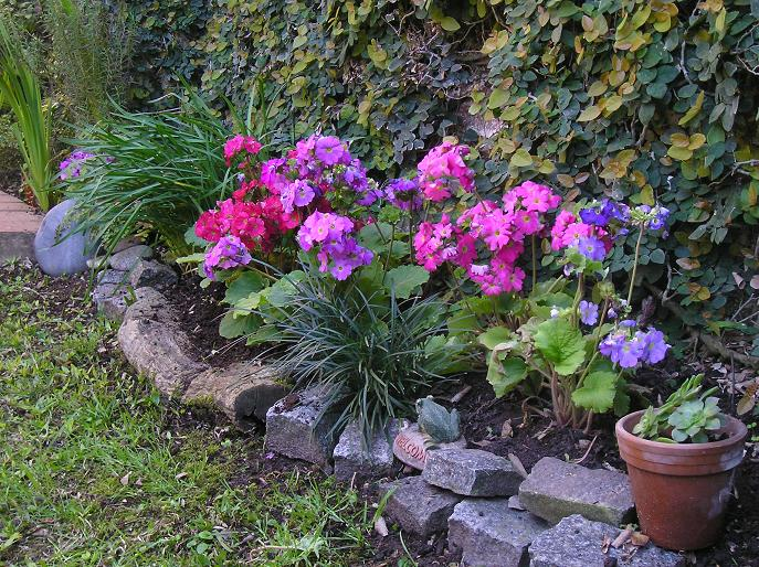 Fotos de jardines y plantas de sombra infojardin ask for Infos jardin