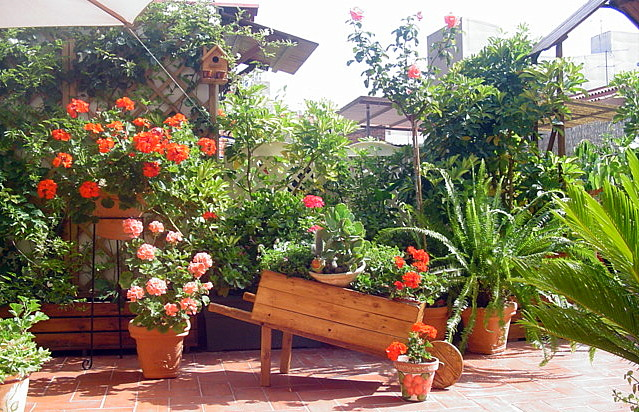 Mi querido patio for Ideas para arreglar mi jardin