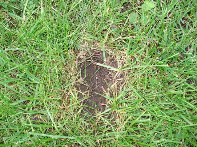 C sped lleno de agujeros como si alguien arrancara un for Arreglar jardin abandonado