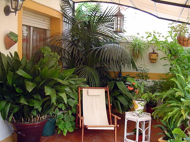 Terrazas balcones y patios con plantas foro de infojardn for Patios con plantas